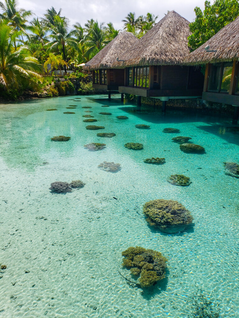 coral reefs at the Intercontinental Thalasso